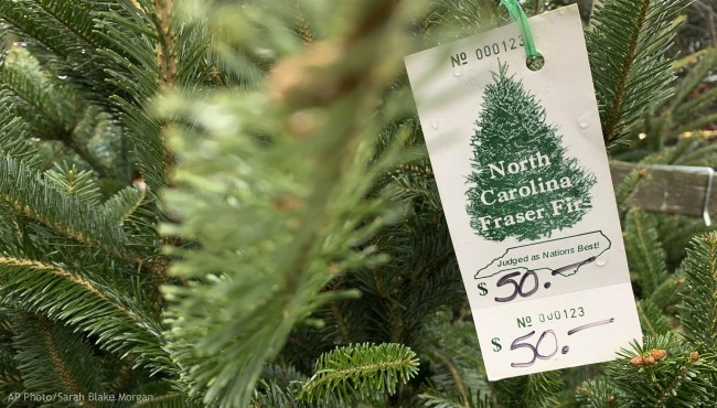 In this Monday, Dec. 9, 2019, photo, a North Carolina fraser fir Christmas tree is for sale in Lenoir, N.C. (AP Photo/Sarah Blake Morgan)