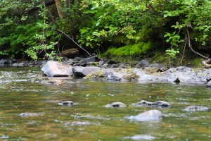 Wood & Water Creek Pic
