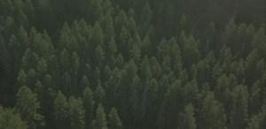 Drone forest shot Wood & Water Developments