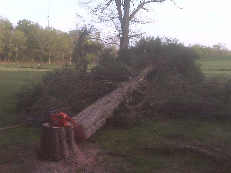 Market Price For Cedar Logs