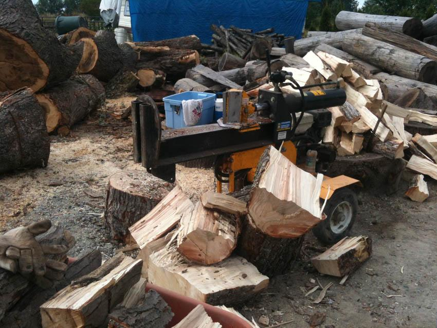 Silver Maple Wood For Firewood