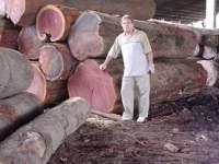 Purple Heart wood on Pinterest
