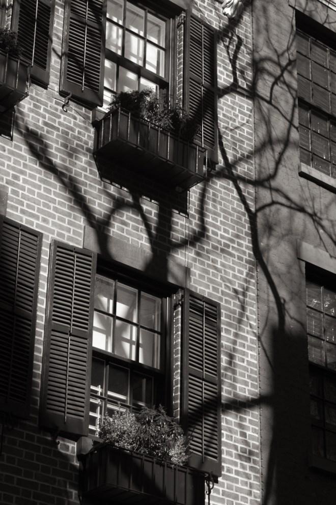 Tree on West 12th Street