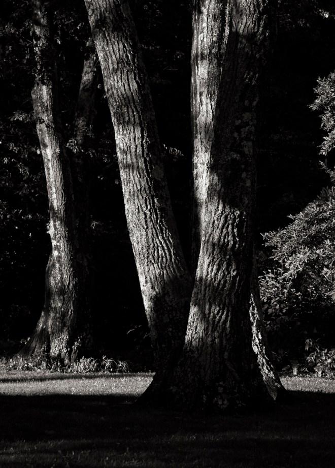 Park - Black and White