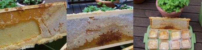 Comb Honey Collage