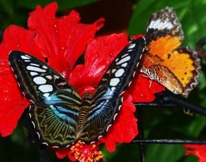 Butterfly garden Penang