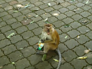 Monkeys at Penang National Park