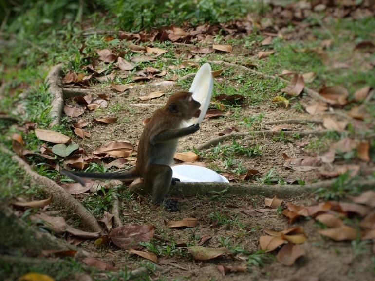 Monkey National Park Penang
