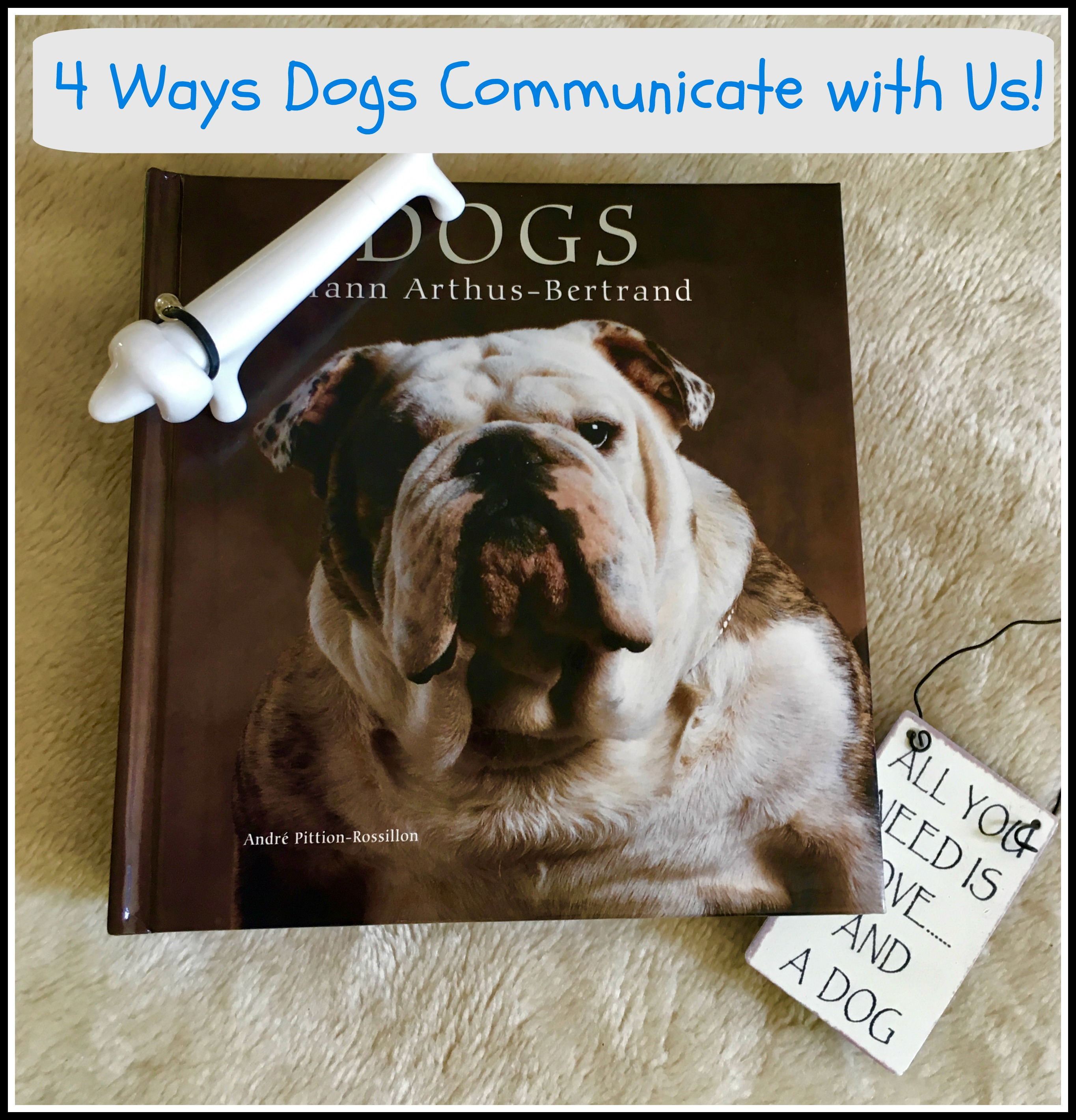 flat lay with dog pen, bull dog book and saying