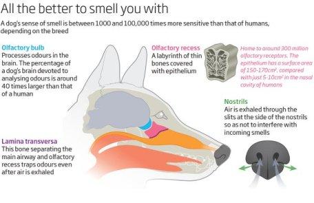 Diagram of a dog nose