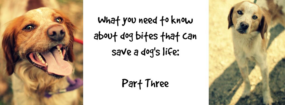 Dog bites: Part Three | Woof Like To Meet