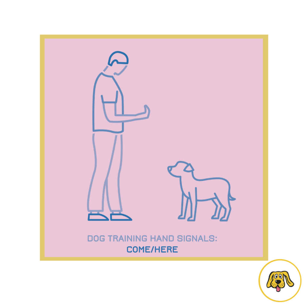 Train your Adult Dog to Learn Basic Commands