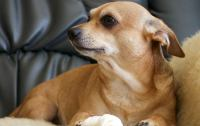 Training Your Dog to Stay Off the Comfy Couch | Woof ...
