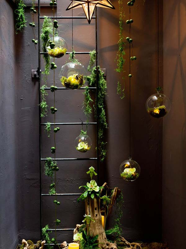 Indoor Gardens DIY Vine Ladder with Hanging Glass Terrariums and Lights