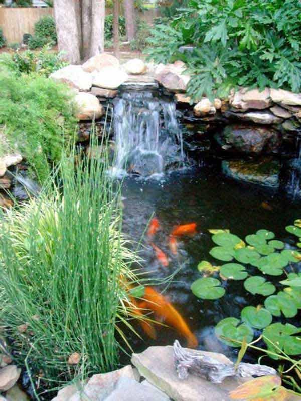 impressive backyard ponds