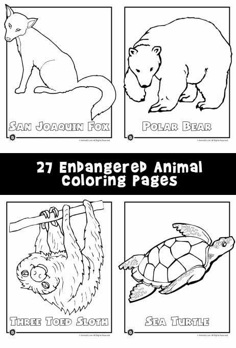 Endangered Animals Coloring Pages Animals From North America The Rainforest The Ocean Woo Jr Kids Activities