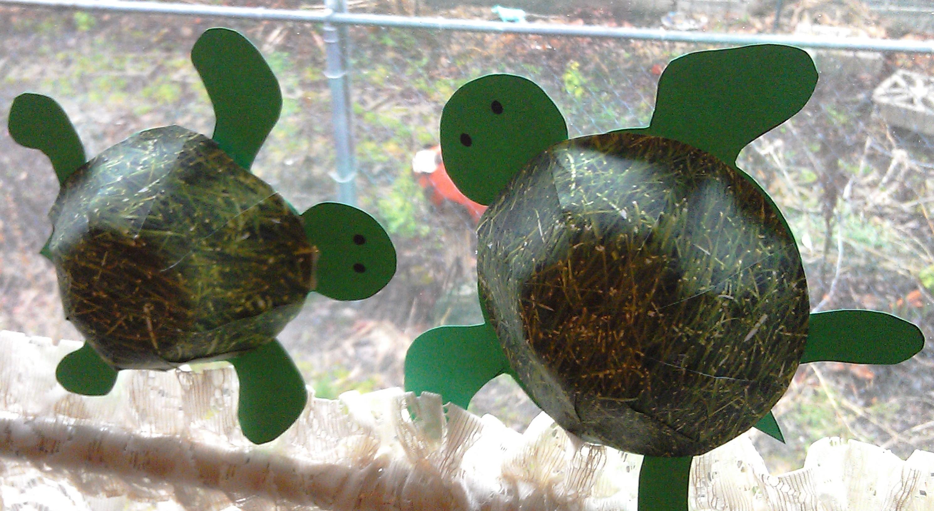 Hare Turtle Preschool Worksheet
