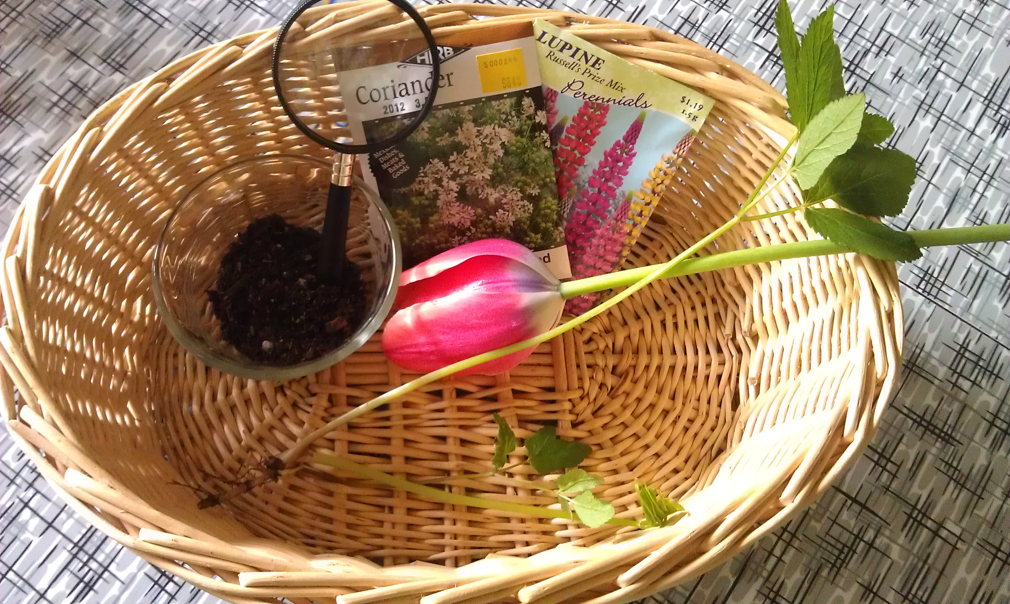 Soil Seeds Roots And Flowers In Our Nature Observation Basket