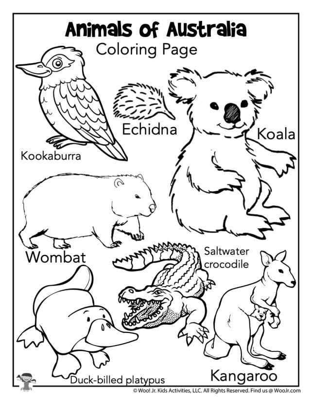 Australia Animals Coloring Page  Woo! Jr. Kids Activities