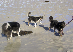 Dogs and seaweed