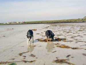 Suzie and Nell had a kelp breakfast