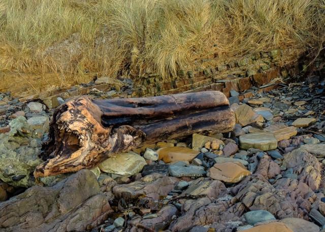Tree trunk flotsam