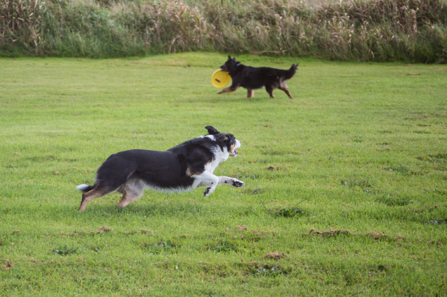 Nell and Suzie at play