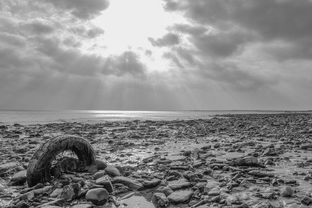 Beach Detritus