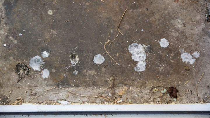 Bird droppings on the doorstep
