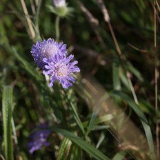 In the Bumblebee Reserve - where the wind was too strong for the bees to be on the wing