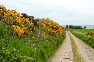 The wonderful verge full of wild flowers