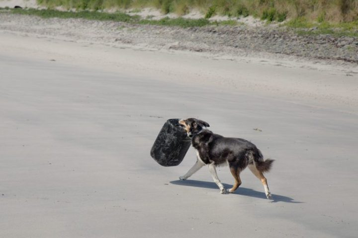 A very daft dog