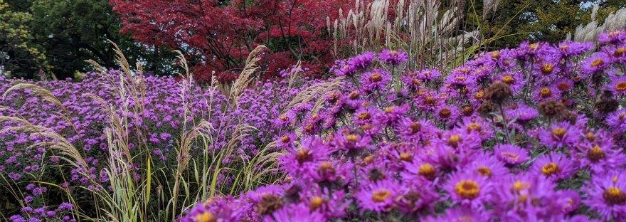 violette Blumen im Planten und Bloomen