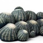 nog meer cactussen voor in huis