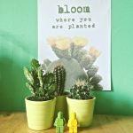 de cactus is een blijvertje in het interieur