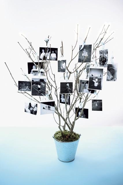 foto's aan een tak