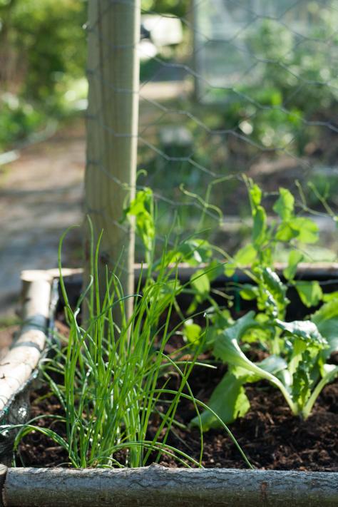 de moestuinbak in de tuin