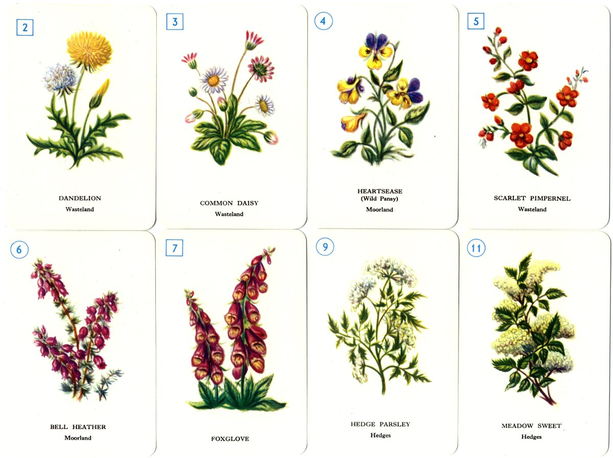 Wild Flower Sevens The World Of Playing Cards