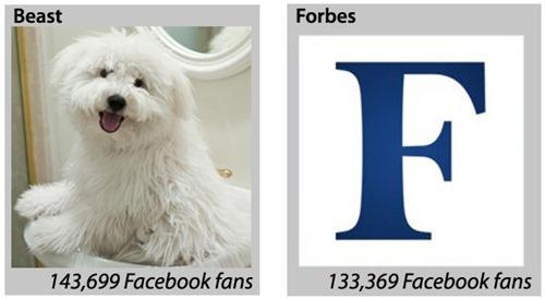Las mascotas en las redes sociales 2