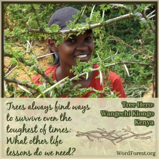 Tree Hero: Wangechi Kiongo