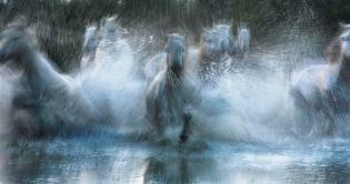 tim-flach-equus-wet-wild-horses-river-gallop