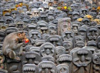 nag-panchami-festival-in-bengaluru-india