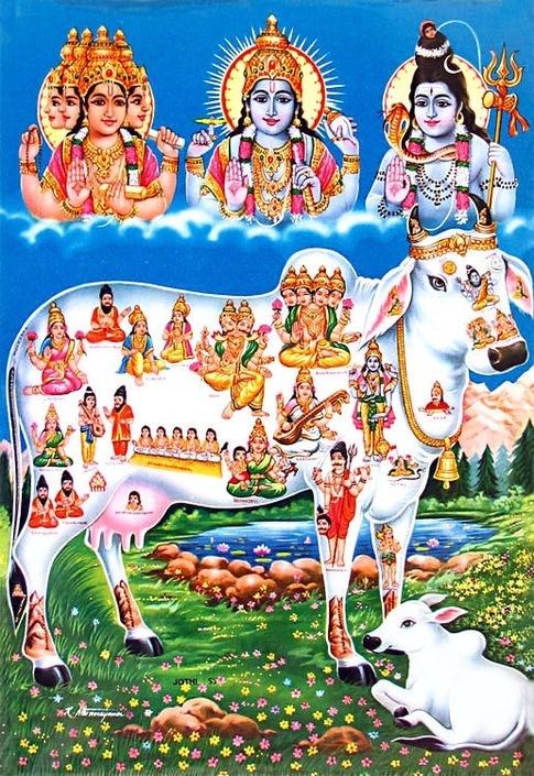 Cow Gomata Aarti