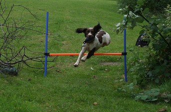 An enthusiastic leap by Bramble Sent in by Emma