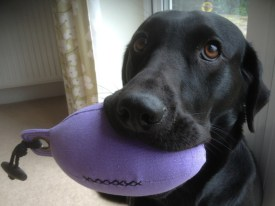 Molly showing off her new Purple dummy Sent in by Richard