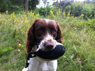 Dexter proudly holding his 'Easy Mark' Partridge dummy Sent in by Steve