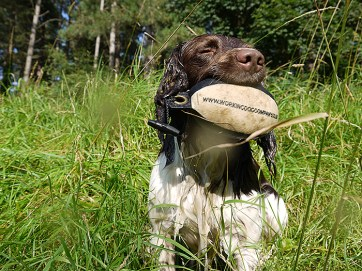 A very wet spaniel using his Easy Mark Partridge dummy in water training! Sent in by Terry