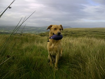 Harley takes a break from training with his Purple WDC Dummy. Sent in by Gavin
