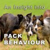 cover pic for pack behaviour tutorial