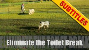 Thumbnail for our herding dog training tutorial